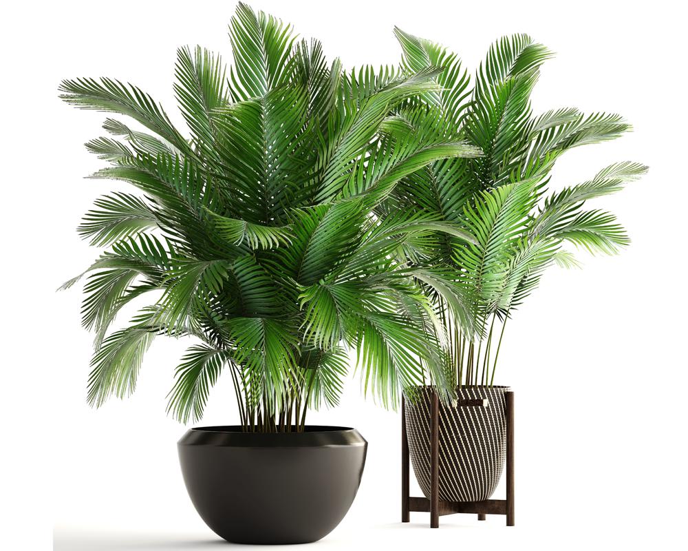 Pianta Camera Da Letto Ossigeno : Camera da letto piante camera da letto piante grasse nella camera