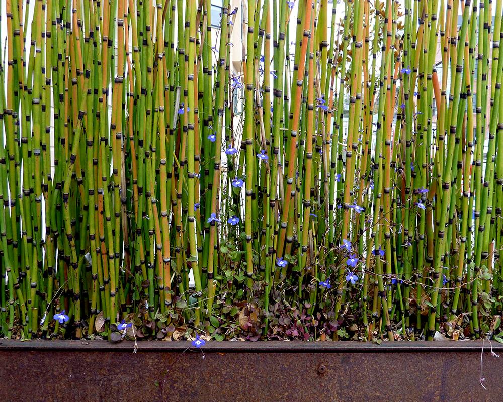 Dieci piante contro l 39 inquinamento da tenere in casa anter - Piante da tenere in camera da letto ...