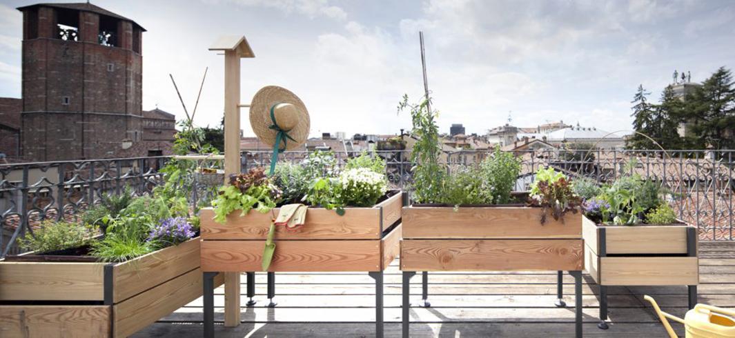 Farsi l\'orto in casa: da dove cominciare per coltivare sul balcone ...