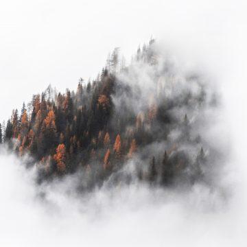 2 - Il bosco incantato