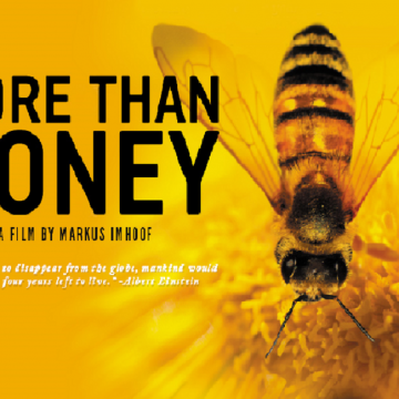 More than honey- Un mondo in pericolo