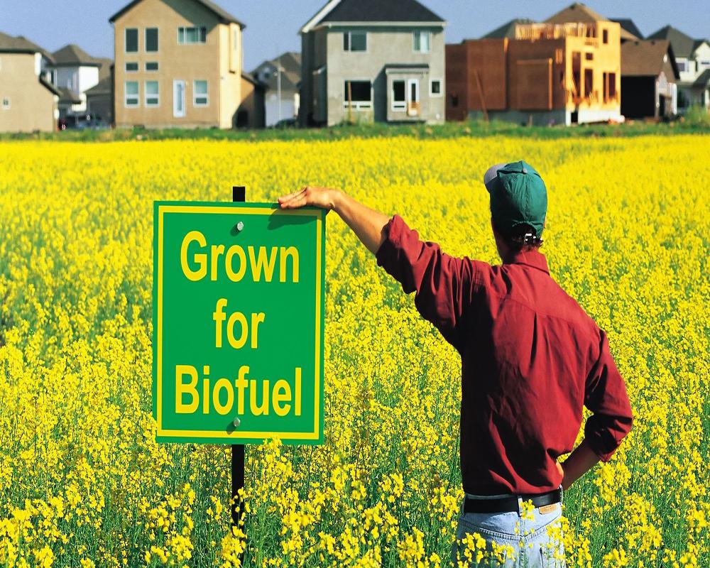 biocarburanti-campo