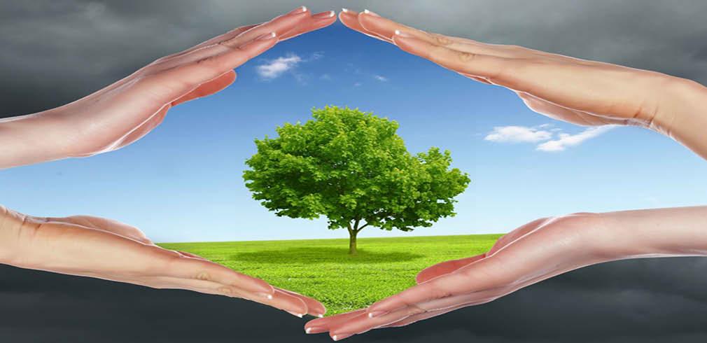 Albero verde salvato dall'inquinamento