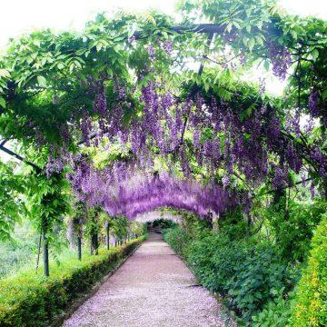 bardini-giardini