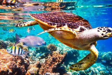 ipbes cover tartaruga