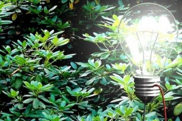 piante-lampadina