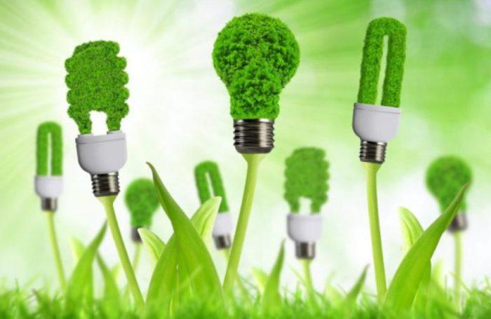 Lampadine fatte di piante, alimentate con energia rinnovabile